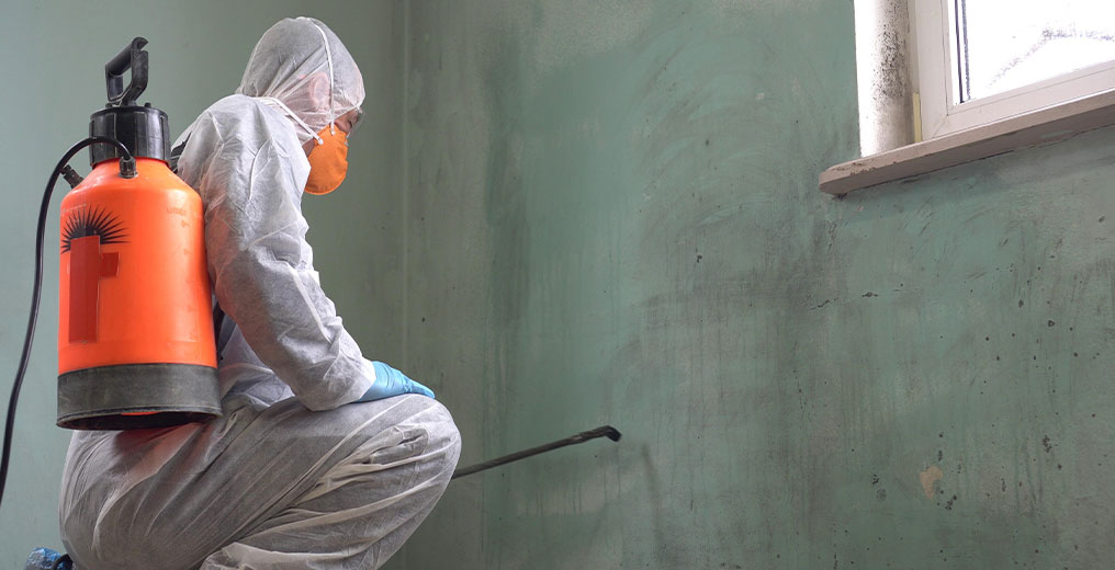 contractor performing mold removal in aurora, il