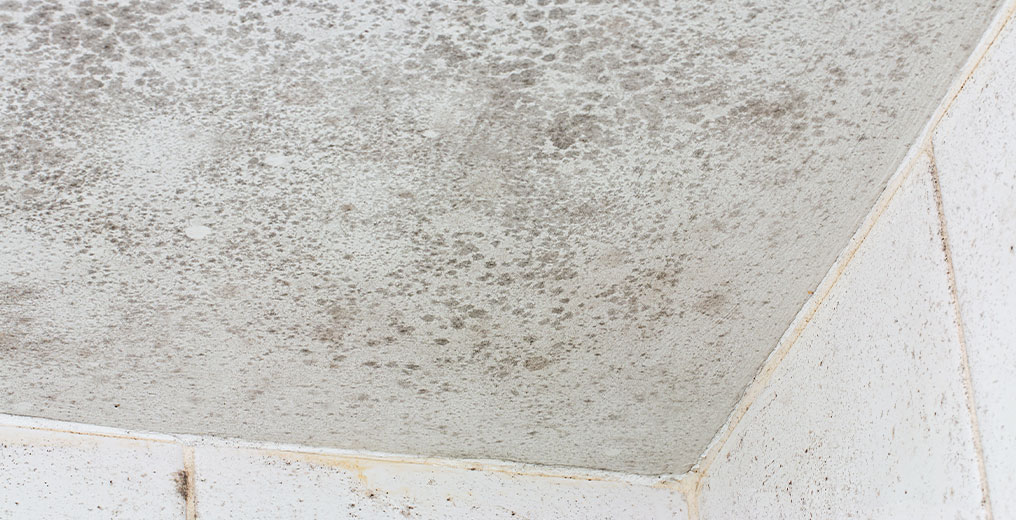 residential property in need of mold removal in chicago, il