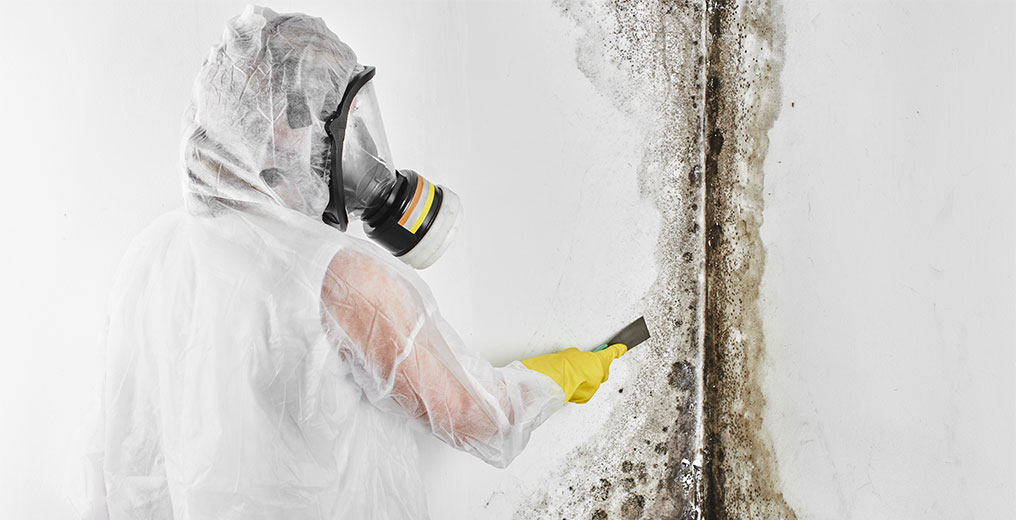 contractor performing mold removal in orland park, il