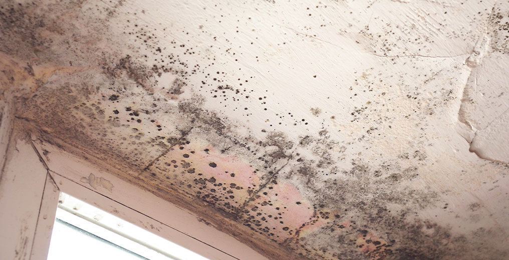commercial property in need of mold removal in schaumburg, il